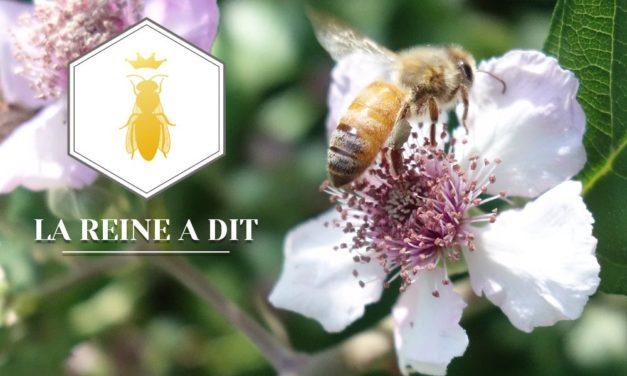 Soutenez un apiculteur et participez au sauvetage des abeilles !